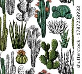Cacti And Succulents Hand Drawn ...