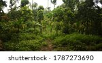 Very Dense Forest With Green...