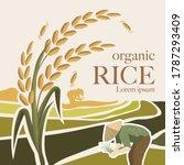 Paddy Rice Premium Organic...