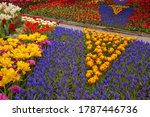 Colorful Display Of Tulips And...
