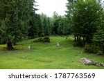green forest with a beautiful... | Shutterstock . vector #1787763569