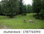 little deer in the reserve... | Shutterstock . vector #1787763593