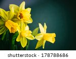 Spring Flowers. Yellow...