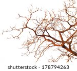 Bare Branches Of A Tree...