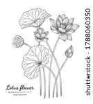 lotus flower and leaf hand... | Shutterstock .eps vector #1788060350
