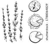 hand drawn illustration of... | Shutterstock .eps vector #1788064829