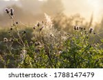 Small photo of White gossamer with drops of morning dew at sunrise in the field, morning landscape in the meadow.
