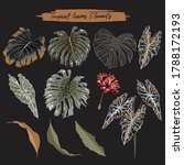set of tropical leaves foliage... | Shutterstock .eps vector #1788172193