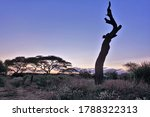 African Landscape At Sunset...