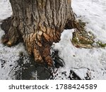 A Thick Textured Tree In The...