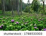 flower background with pink... | Shutterstock . vector #1788533303