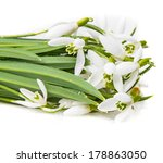 snowdrop flowers on a white... | Shutterstock . vector #178863050