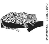 Leopard. Vector Graphic Drawin...