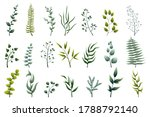 Collection Of Green Leafy...