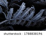 Frosty Fern Up In The Mountains ...