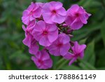 small pink flowers in green... | Shutterstock . vector #1788861149