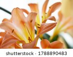 yellow orange lilies on a white ... | Shutterstock . vector #1788890483