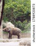 A Large Elephant Sprinkles...