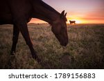 Horse Silhouette At Sunset  In...