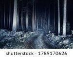 Illuminated Snow Covered S...