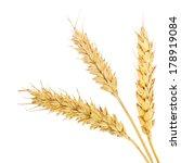 three wheat ears isolated on... | Shutterstock . vector #178919084