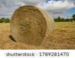 Freshly Rolled Hay Bail In A...
