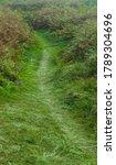 Path Through Bracken Near Sand...