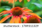 Blooming medicinal herb...