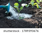 Irrigation  Watering With ...