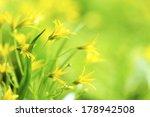 Yellow Spring Flowers Macro...