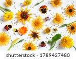 Pattern Of Autumn Flowers On...