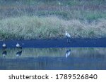 African Spoonbill And Two...