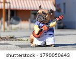 Funny Dog Cosutume On French...