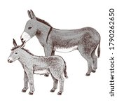 Hand Drawn Donkey And Foal....