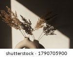 Dry Pampas Grass   Reed In...