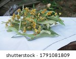 Dried Linden Flowers On A White ...