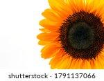 Sunflower Head  Decorative...
