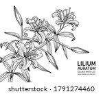 sketch floral decorative set.... | Shutterstock .eps vector #1791274460