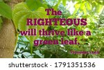 Bible Verse About Righteous...