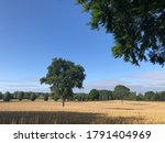 Summer Landscape Of Arable...
