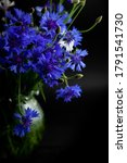 Cornflower Flower. Bouquet Of...