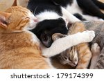 Stock photo sleeping kittens red haired white black and tabby 179174399
