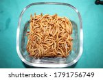 Mealworms   mealworms on a...
