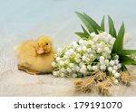 easter little yellow fluffy... | Shutterstock . vector #179191070