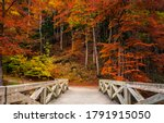 Small photo of Autumn forest bridge way in scenery fall woods