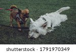 selective focus on an exhausted ...   Shutterstock . vector #1791970349