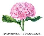 Pink Hydrangea Flowers ...