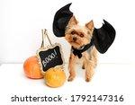Funny dog in halloween costume...