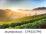 morning sunrise in strawberry... | Shutterstock . vector #179221790