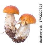Red Mushroom  Two Mushroom...